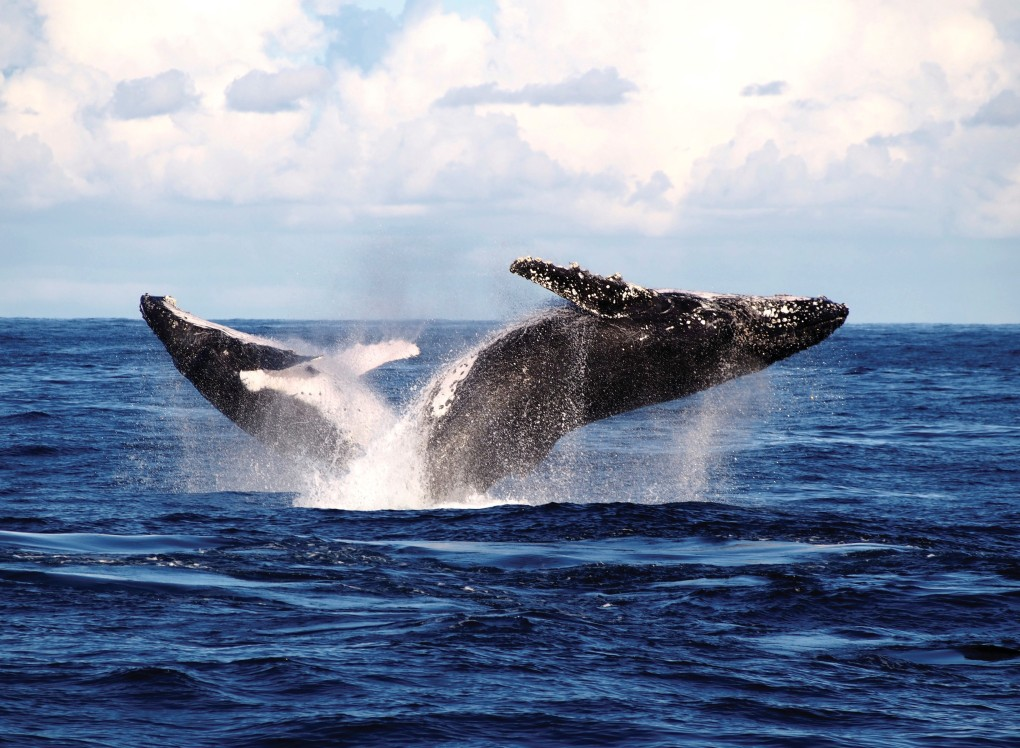 Whale Watching, Port Stephens