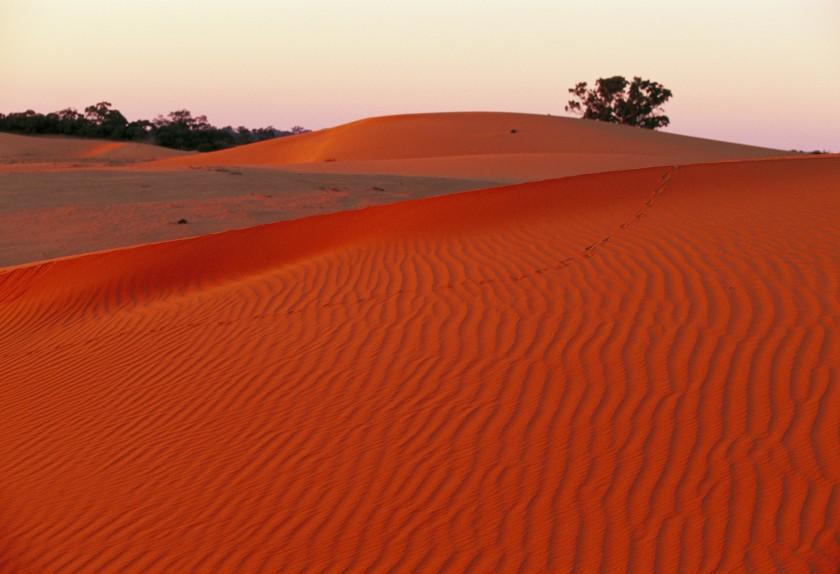 Sand dunes, Mungo NP